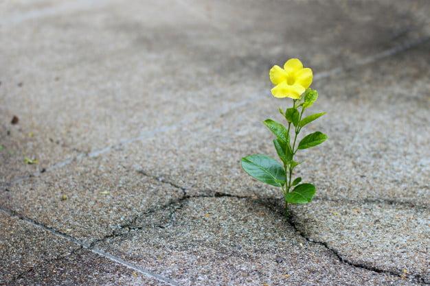 geel plantje door asfalt